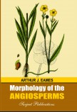 MORPHOLOGY OF THE ANGIOSPERMS
