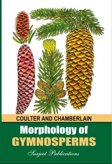 MORPHOLOGY OF GYMNOSPERMS